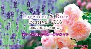 神戸布引ハーブ園/ロープウェイで、『ラベンダー&ローズフェスティバル2016』が開催中♪