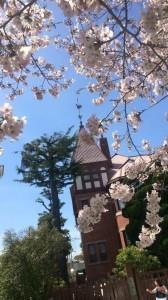 北野は桜が見頃を迎えました♪