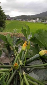 当店自慢の自家製の神戸市北区の夏野菜が届きました