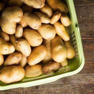 神戸市北区の農園で採れた美味しいじゃが芋