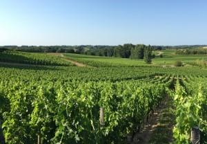 ボルドーワインで有名なボルドー近郊のワイン産地、サン・テミリオン