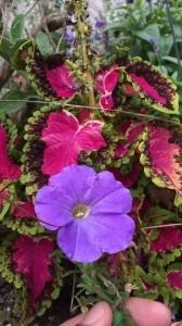 北野の街には色とりどりの鮮やかお花が咲いています