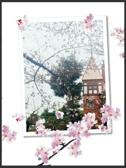北野の桜が開花しました!!
